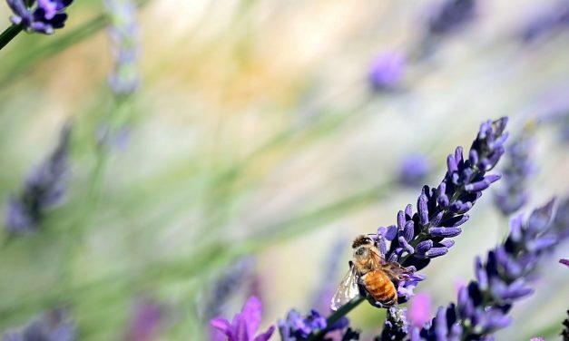 La miel, un eslabón exquisito del turismo saludable en colón