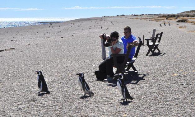 Temporada de fauna total en puerto madryn